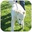 Photo 3 - Great Pyrenees Mix Dog for adoption in Lexington, Missouri - Mindy