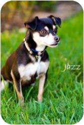 Chihuahua/Miniature Pinscher Mix Dog for adoption in Houston, Texas - Jazz