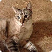 Adopt A Pet :: Figuero - Lauderhill, FL