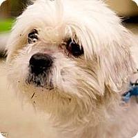 Adopt A Pet :: Martin - Pittstown, NJ