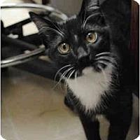 Adopt A Pet :: Martin - Secaucus, NJ
