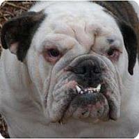 Adopt A Pet :: Dollar - Winder, GA