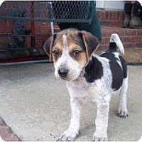 Adopt A Pet :: Buck (adoption pendind) - Adamsville, TN