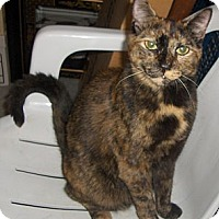 Adopt A Pet :: Chica - Richmond, VA