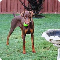 Adopt A Pet :: Landry - Fort Worth, TX