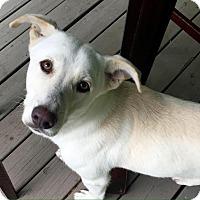 Adopt A Pet :: Wallace - Nashville, TN