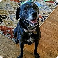 Adopt A Pet :: Koko - Yorktown, VA