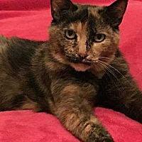 Adopt A Pet :: Cleo (Cleopatra) - New City, NY