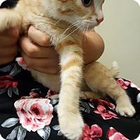 Adopt A Pet :: Booker - La puente, CA