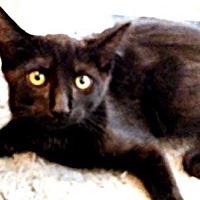 Adopt A Pet :: Icy - Petersburg, VA