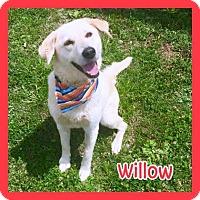 Adopt A Pet :: Willow - Jasper, IN