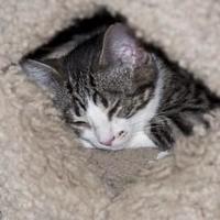 Adopt A Pet :: Jerry - Elk Grove Village, IL