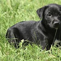 Adopt A Pet :: Mateus - Mechanicsburg, PA