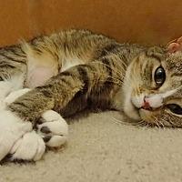 Adopt A Pet :: Elsa - Parkton, NC