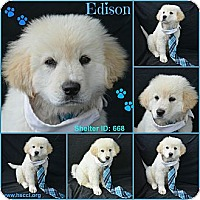 Adopt A Pet :: Edison - Plano, TX
