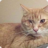 Adopt A Pet :: Donnie - Bedford, MA