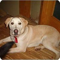 Adopt A Pet :: Gavin - North Jackson, OH