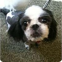 Adopt A Pet :: Suki - Crofton, MD