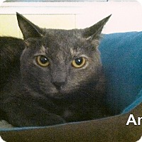 Adopt A Pet :: Angel - Medway, MA