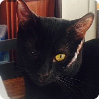 Adopt A Pet :: Boo - Dawson, GA