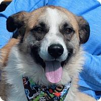 Adopt A Pet :: Brogan-PENDING - Garfield Heights, OH