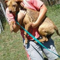 Adopt A Pet :: Mayze - Dublin, GA