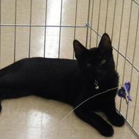 Adopt A Pet :: Theodore - Morgan Hill, CA