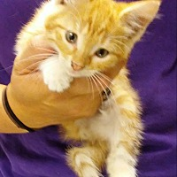 Adopt A Pet :: Teddy *$20 Fee 8/2-/31* - Ottawa, KS