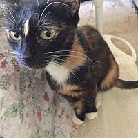 Adopt A Pet :: Rosemary - Lodi, CA