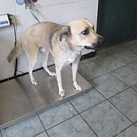 Adopt A Pet :: Dobby - Weatherford, TX