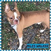 Adopt A Pet :: Miles Walker aka Wheatley FL - various cities, FL