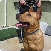 Adopt A Pet :: Iris - Marina del Rey, CA