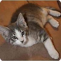Adopt A Pet :: Decibella - Davis, CA