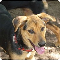 Adopt A Pet :: Dudley - Pointblank, TX