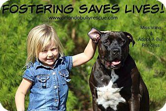 American Bulldog/Labrador Retriever Mix Dog for adoption in Orlando, Florida - Princess