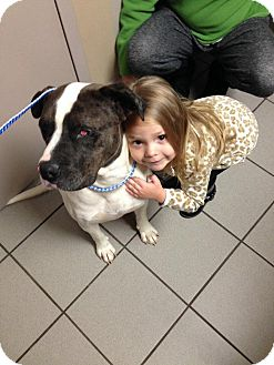 Pit Bull Terrier Mix Dog for adoption in East Hartford, Connecticut - Jax-pending adoption