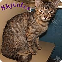 Adopt A Pet :: Skittles - Converse, TX