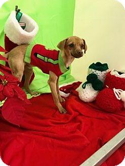 Hound (Unknown Type) Mix Dog for adoption in Fort Worth, Texas - STILTS