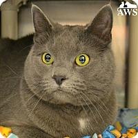 Adopt A Pet :: Chloe - West Kennebunk, ME