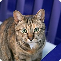 Adopt A Pet :: Audrey - Richmond, VA