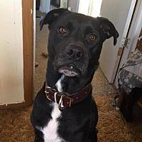 Adopt A Pet :: Boogie - greenville, SC