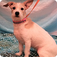Adopt A Pet :: Bubbles - Hagerstown, MD
