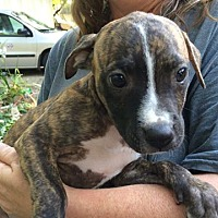 Adopt A Pet :: Casey - Olive Branch, MS