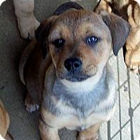 Adopt A Pet :: CUPCAKE - Glastonbury, CT