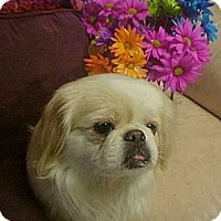 Adopt A Pet :: MAGGIE - Cathedral City, CA