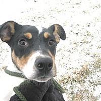 Adopt A Pet :: #028-14  @ Animal Shelter - Zanesville, OH