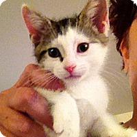 Adopt A Pet :: Harrison - Green Bay, WI
