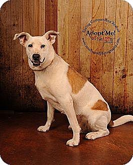 Hound (Unknown Type)/Terrier (Unknown Type, Medium) Mix Dog for adoption in Danbury, Connecticut - Burt