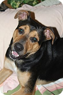 Black and Tan Coonhound/Shepherd (Unknown Type) Mix Dog for adoption in Oakland, Arkansas - Gracie