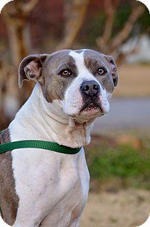 Pit Bull Terrier Dog for adoption in Washington, Georgia - Poppi
